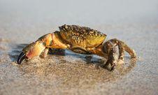 Free Sad Crab Royalty Free Stock Image - 10018776