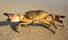 Free Malicious Crab Stock Photo - 10018830