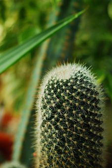 Free Cactus Stock Photo - 10018880