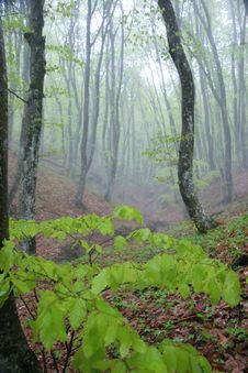 Free Fog In Wood Stock Images - 10018894