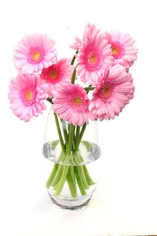Free Pretty Gerbera Close Up Royalty Free Stock Images - 10019099