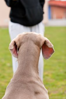 Free Dog Waiting Patiently Stock Photography - 10019602