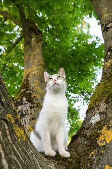 Free Cat, Green, Tree, Mammal Stock Image - 100194501