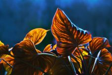 Free Plant, Flower, Flora, Sky Royalty Free Stock Image - 100194686
