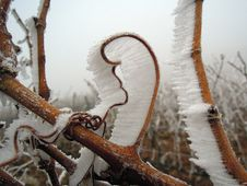 Free Winter, Wood, Freezing, Frost Stock Images - 100195004