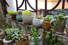 Free Plant, Flowerpot, Herb, Garden Royalty Free Stock Photography - 100195987