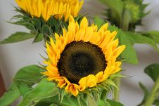 Free Flower, Sunflower, Sunflower Seed, Plant Stock Images - 100197604