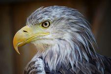 Free Beak, Bird Of Prey, Bird, Eagle Stock Photos - 100197633