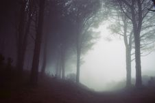 Free Fog, Mist, Forest, Atmosphere Stock Images - 100197764