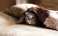Free Cat, Small To Medium Sized Cats, Cat Like Mammal, Eye Royalty Free Stock Photo - 100197955