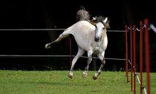 Free Horse, Bridle, Horse Like Mammal, Stallion Royalty Free Stock Image - 100198296
