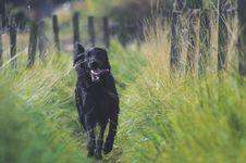 Free Dog, Black, Dog Like Mammal, Dog Breed Royalty Free Stock Photo - 100198415
