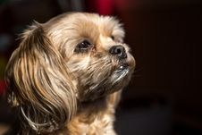 Free Dog, Dog Like Mammal, Dog Breed, Snout Stock Photography - 100198532
