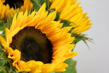 Free Flower, Sunflower, Yellow, Sunflower Seed Stock Photo - 100198560