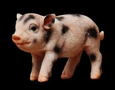 Free Pig Like Mammal, Pig, Mammal, Fauna Stock Image - 100198571