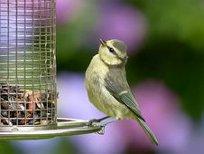 Free Bird, Fauna, Beak, Old World Flycatcher Stock Images - 100199154