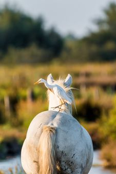 Free Horse, Horse Like Mammal, Livestock, Mane Royalty Free Stock Photos - 100199588