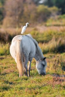 Free Horse, Fauna, Pasture, Crane Like Bird Royalty Free Stock Images - 100199809