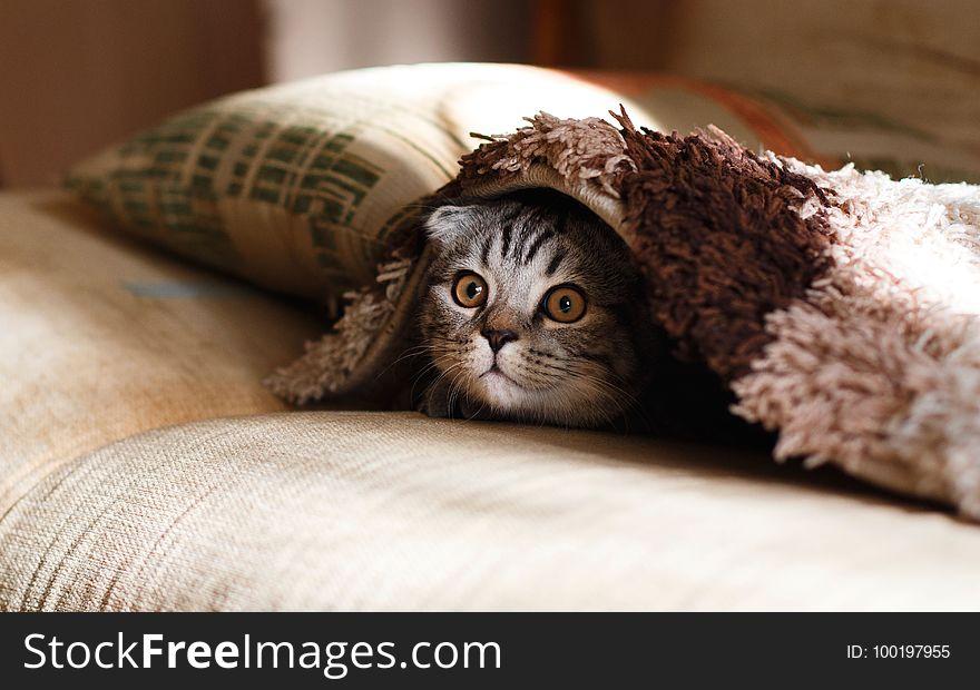 Cat, Small To Medium Sized Cats, Cat Like Mammal, Eye