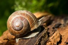 Free Snail Shell Stock Photography - 10020282