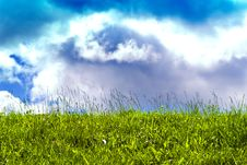 Free Sunny Sky And Poisonous Grass Royalty Free Stock Image - 10020306