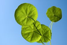 Free Four Leaves In Sky Royalty Free Stock Photography - 10020587
