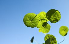 Free Green Leaves In Sky Stock Photos - 10020593