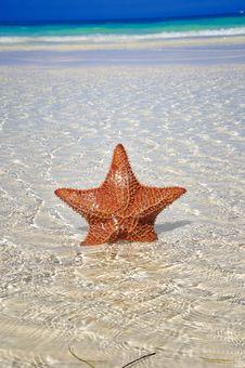 Free Starfish Royalty Free Stock Photo - 10020785
