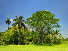 Free Cuban Countryside Landscape Royalty Free Stock Photography - 10021617