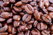 Free Fresh Coffee Bean Series 03 Stock Images - 10021704