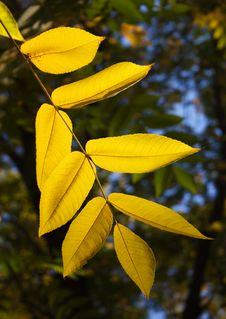 Free Leaves In Yellow Stock Photography - 10021902