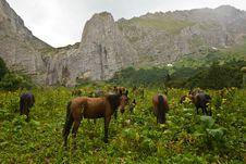Free Horse Stock Photo - 10022950
