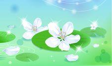 Free Lotus Stock Photography - 10022972