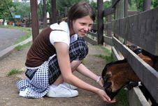 Little Girl Feeding Goats Stock Photos