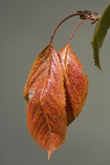 Free Brown Leaf Stock Photography - 10023362