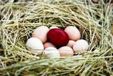 Free Eggs In A Nest Royalty Free Stock Photo - 10023365