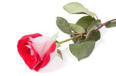 Free Red Rose Stock Photos - 10023743