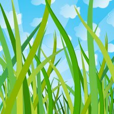 Free Ecological Background With A Grass Stock Photography - 10023832