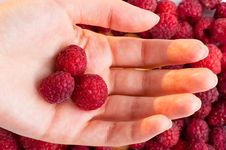 Raspberry Background Royalty Free Stock Image