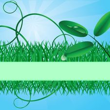 Free Ecological Banner With A Grass Stock Photography - 10023842