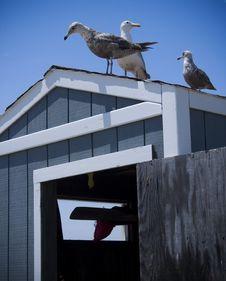 Free Beach Shack And Seagulls Stock Photo - 10024590