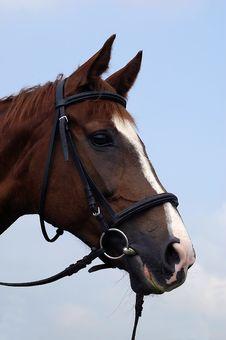 Free Horse Stock Image - 10027171