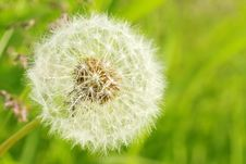 Free Fluffy Dandelion Royalty Free Stock Photos - 10027428