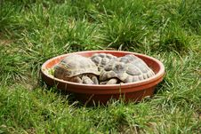 Free Turtles Stock Photography - 10028102