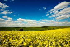 Free Beautiful Field Stock Photography - 10029862