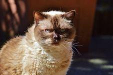 Free Cat, Whiskers, Small To Medium Sized Cats, Cat Like Mammal Royalty Free Stock Photo - 100242785