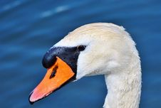 Free Beak, Bird, Water Bird, Ducks Geese And Swans Stock Photos - 100243033