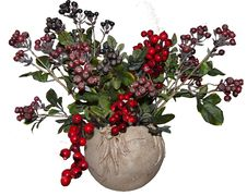 Free Plant, Flower, Flowerpot, Fruit Stock Image - 100243461