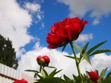 Free Flower, Red, Sky, Plant Royalty Free Stock Photo - 100243885