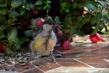 Free Bird, Fauna, Beak, Old World Flycatcher Royalty Free Stock Photo - 100244205